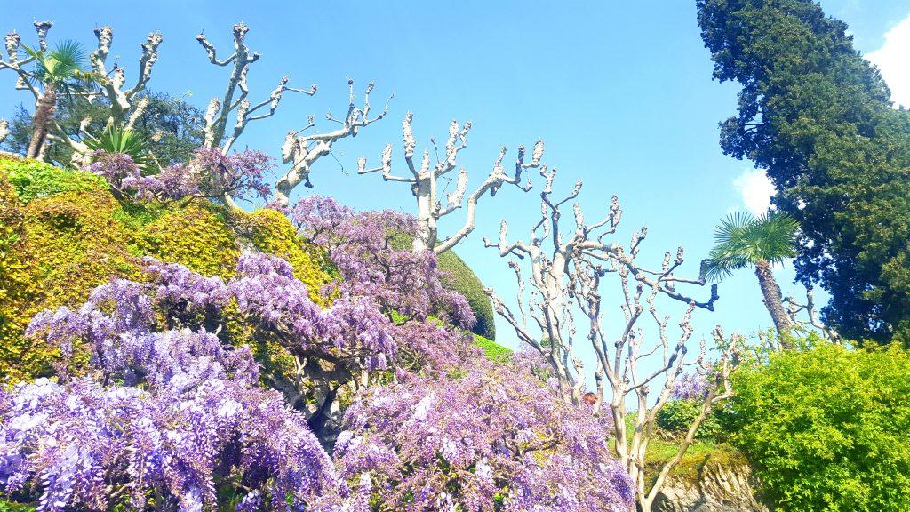 Lac de côme milan italie blog voyage clioandco fleurs