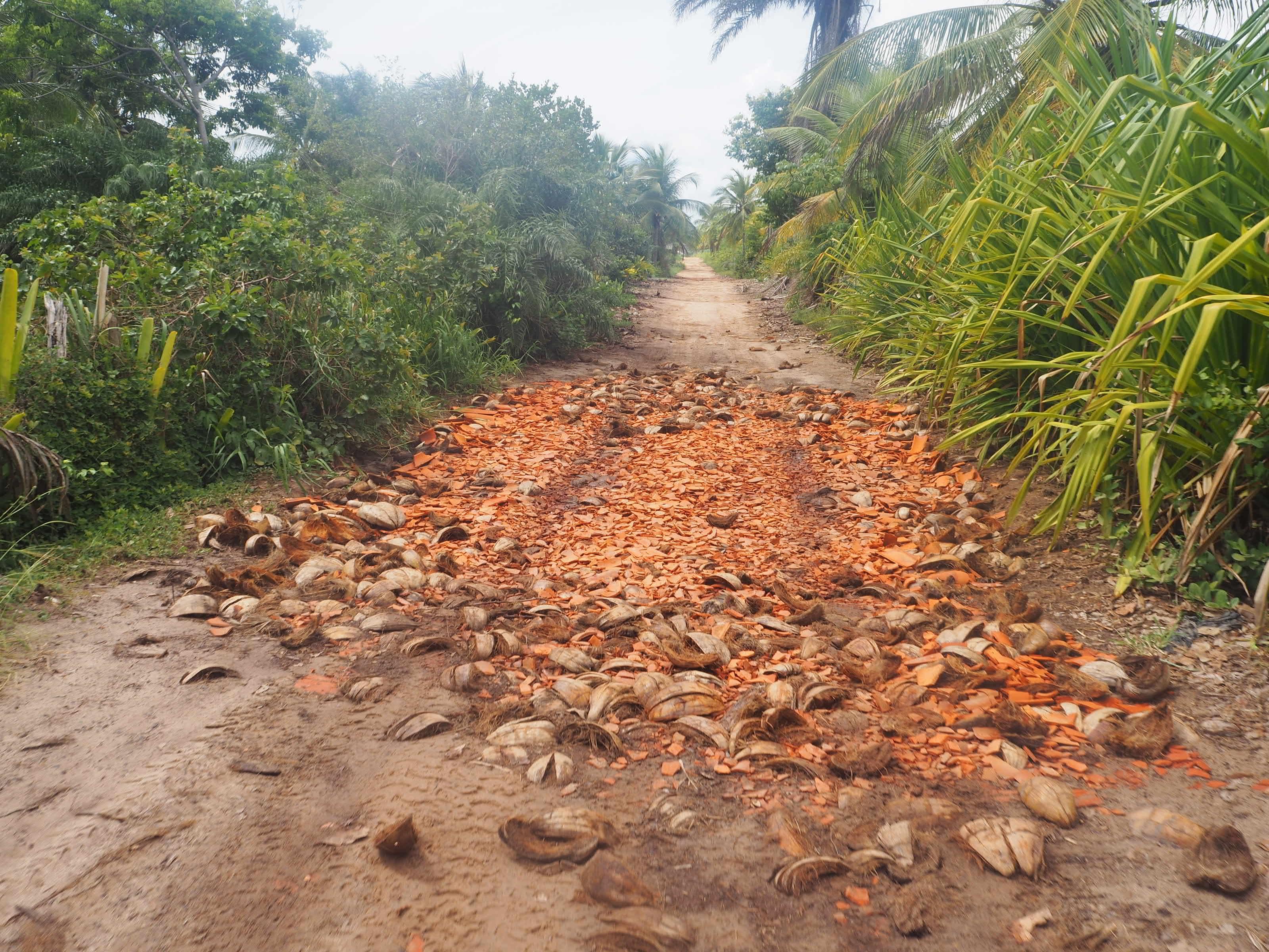 Route de cocotier à Barra Grande. Les routes sont aussi faites de coco écrasées