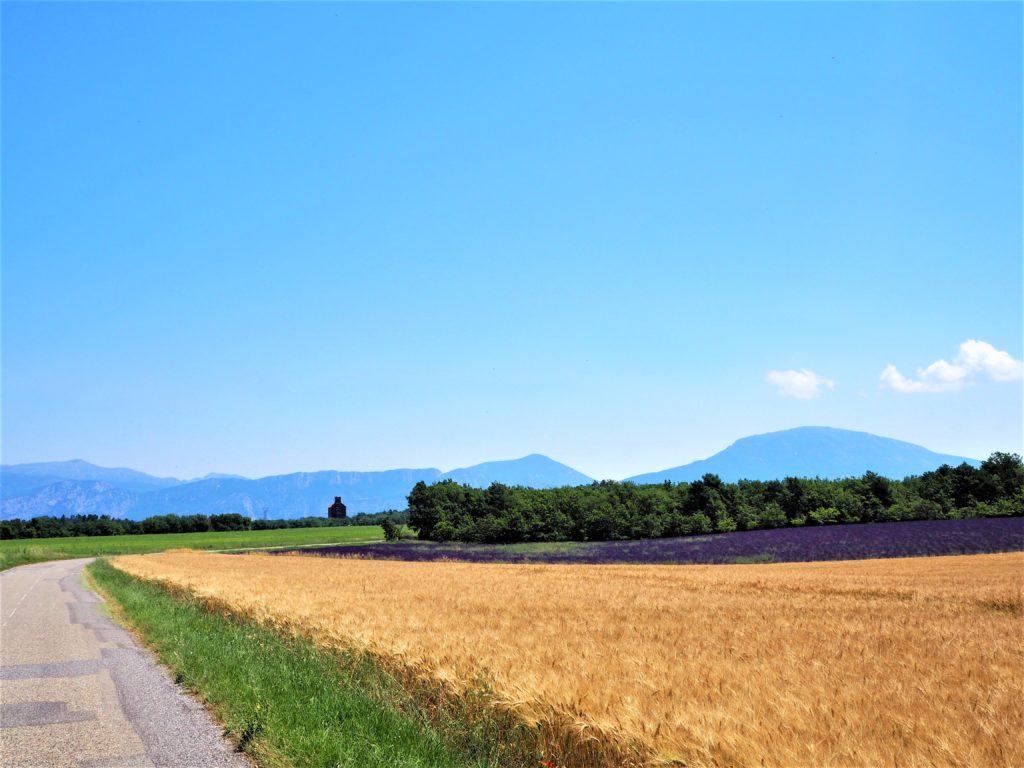 Champs de lavande et blé. Alpes de Haute-Provence, Parc Naturel Régional du Verdon clioandco blog