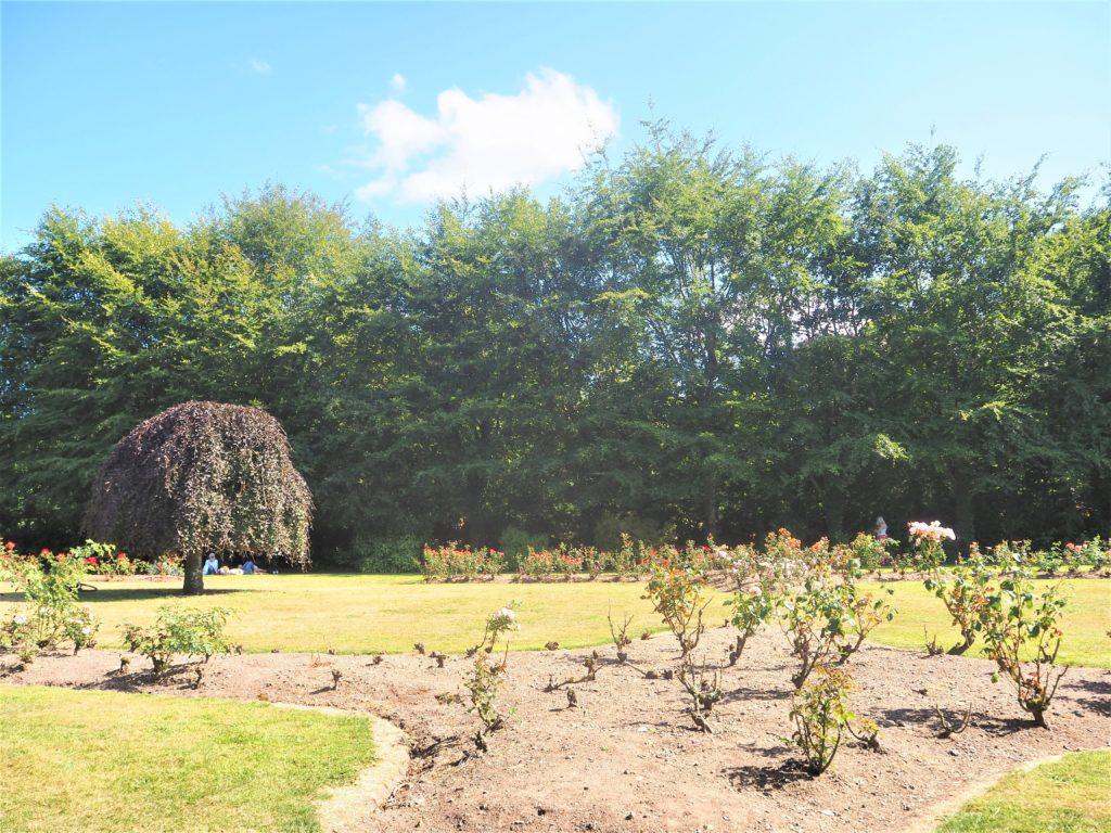 Fitzgerald-Park-à-Cork-irlande.-le jardin