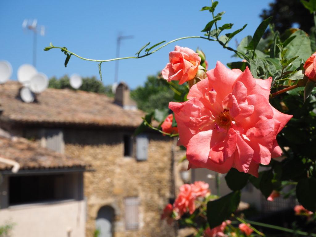 Village de Lourmarin dans le Luberon, Vaucluse. PACA. Fleurs