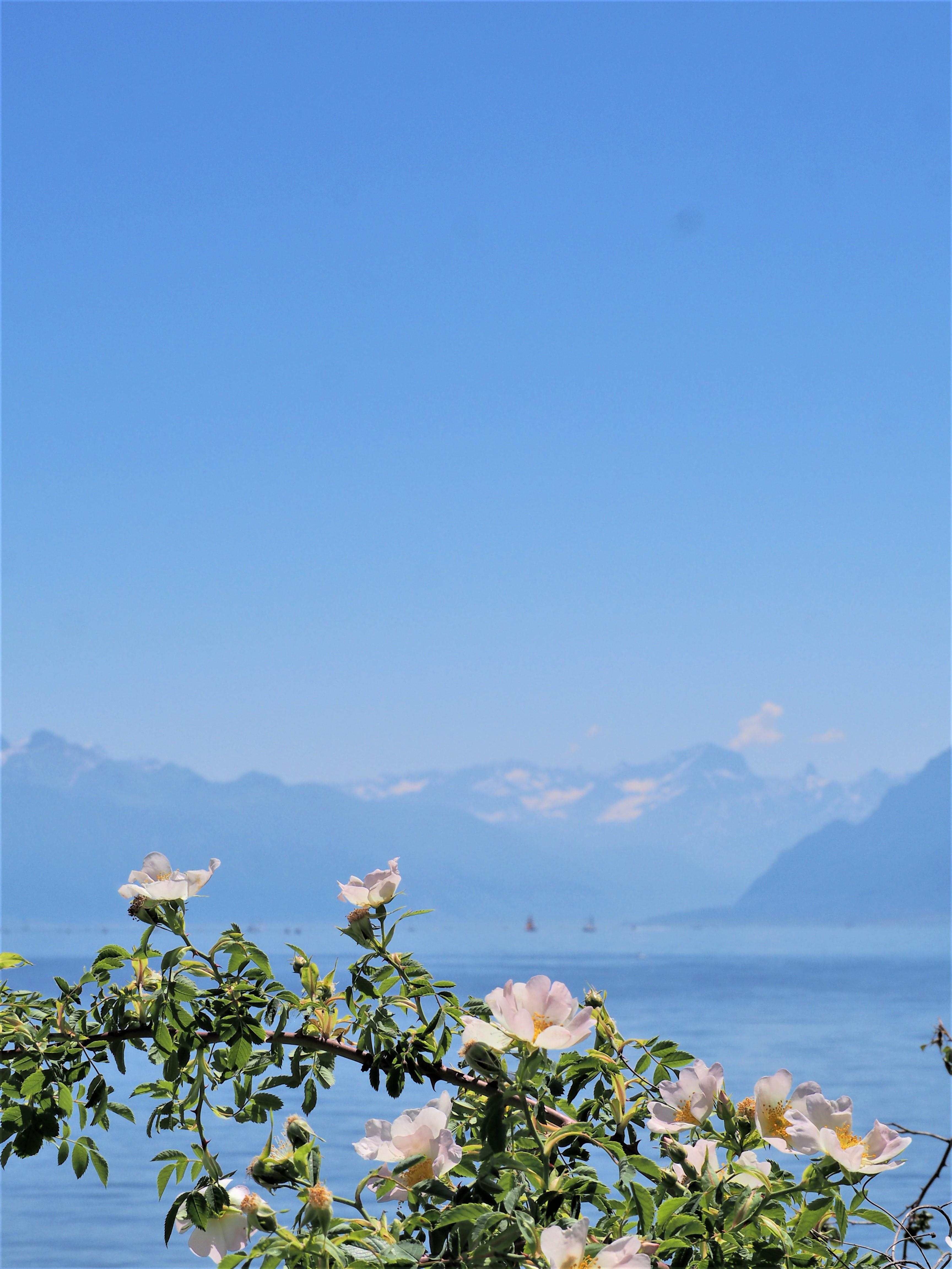 Automne Hiver lac Léman Lausanne Suisse fleur clioandco blog voyage