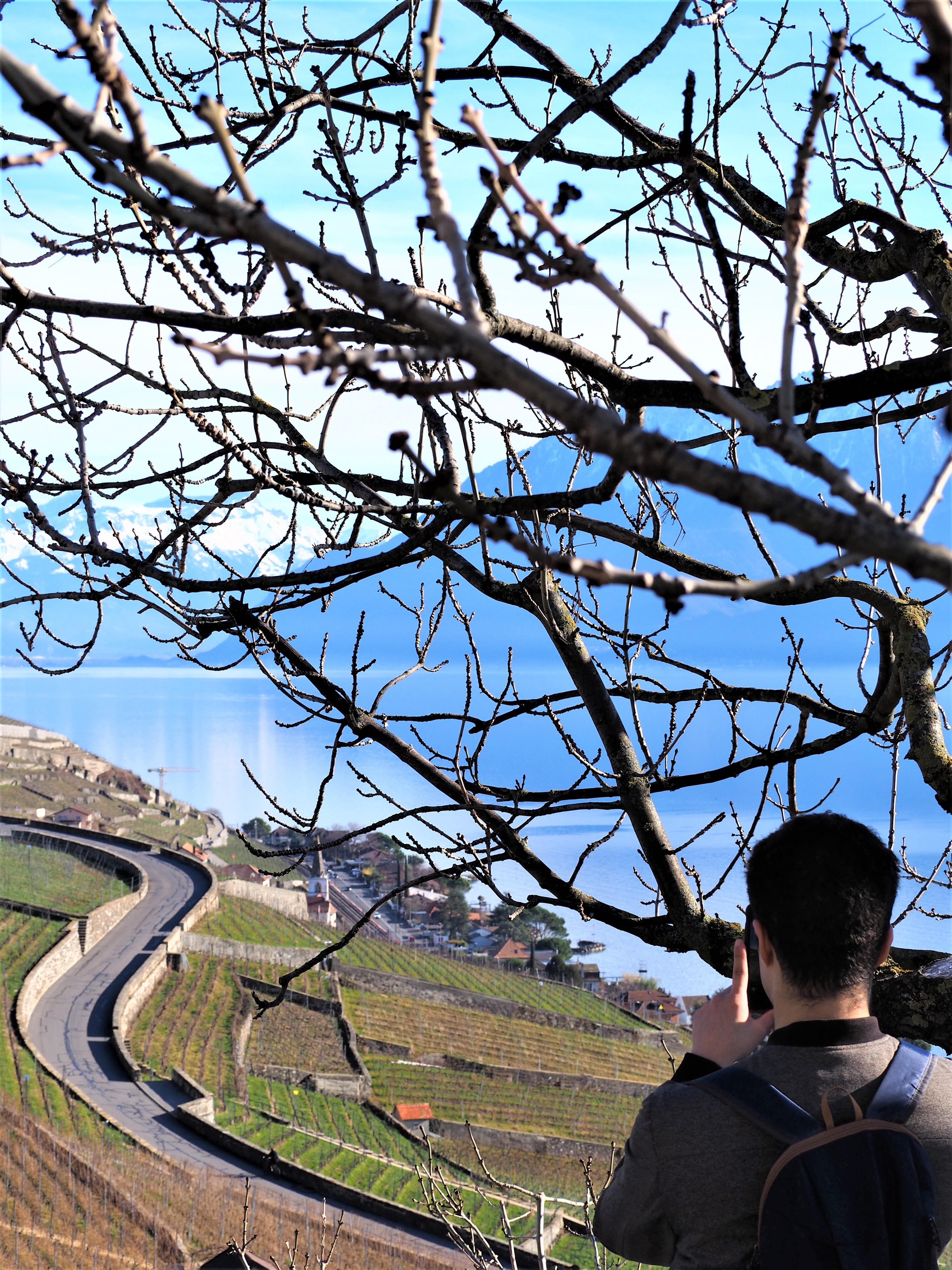 sébastien-vignoble-de-lavaux-Clioandco-blog-voyage-lausanne-suisse-canton-de-vaud-Lavaux-balade.