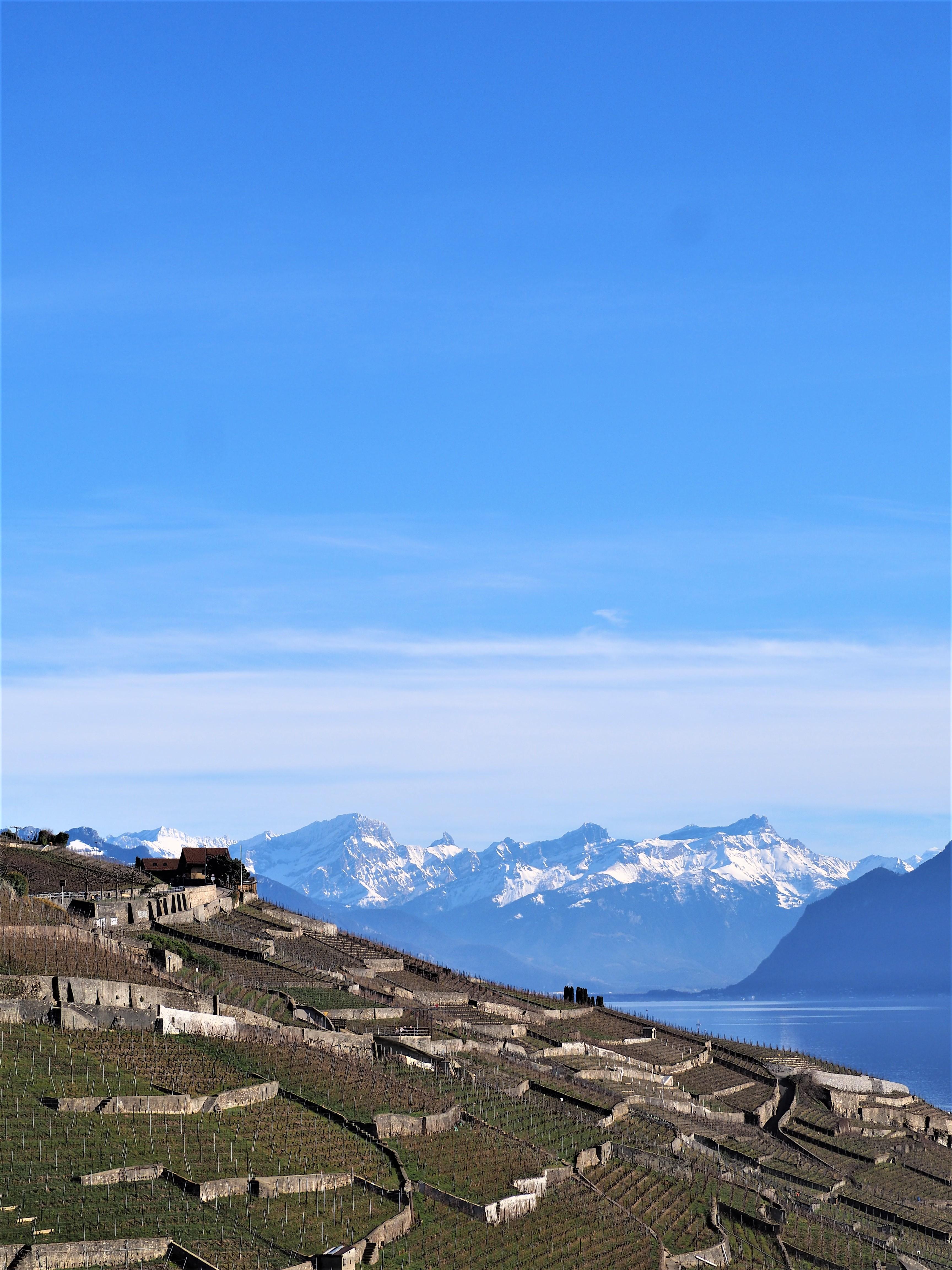 vignoble-en-terrasses-lavaux-Clioandco-blog-voyage-lausanne-suisse-canton-de-vaud.