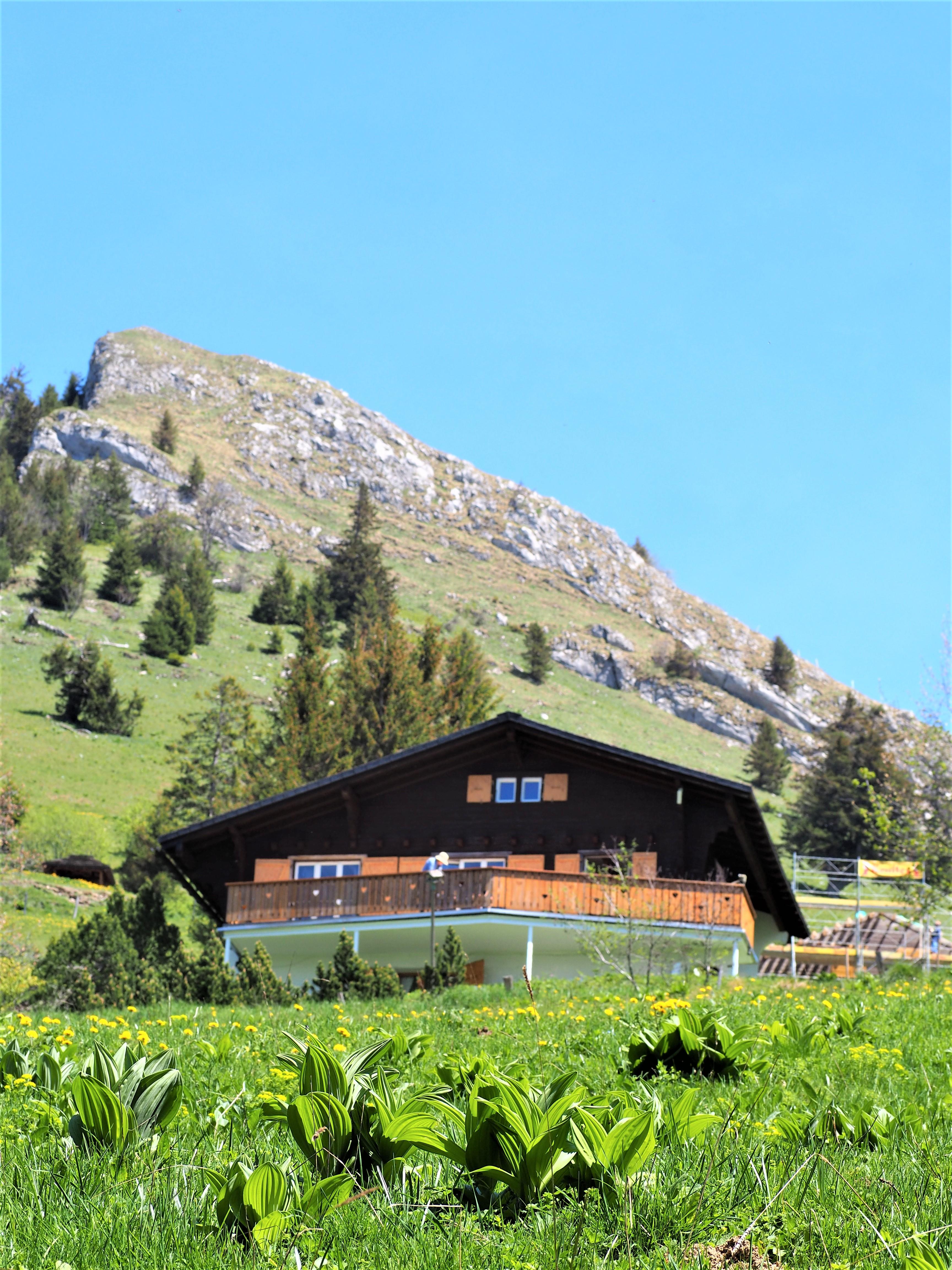 Dent de jaman lausanne balade suisse blog voyage clioandco maison