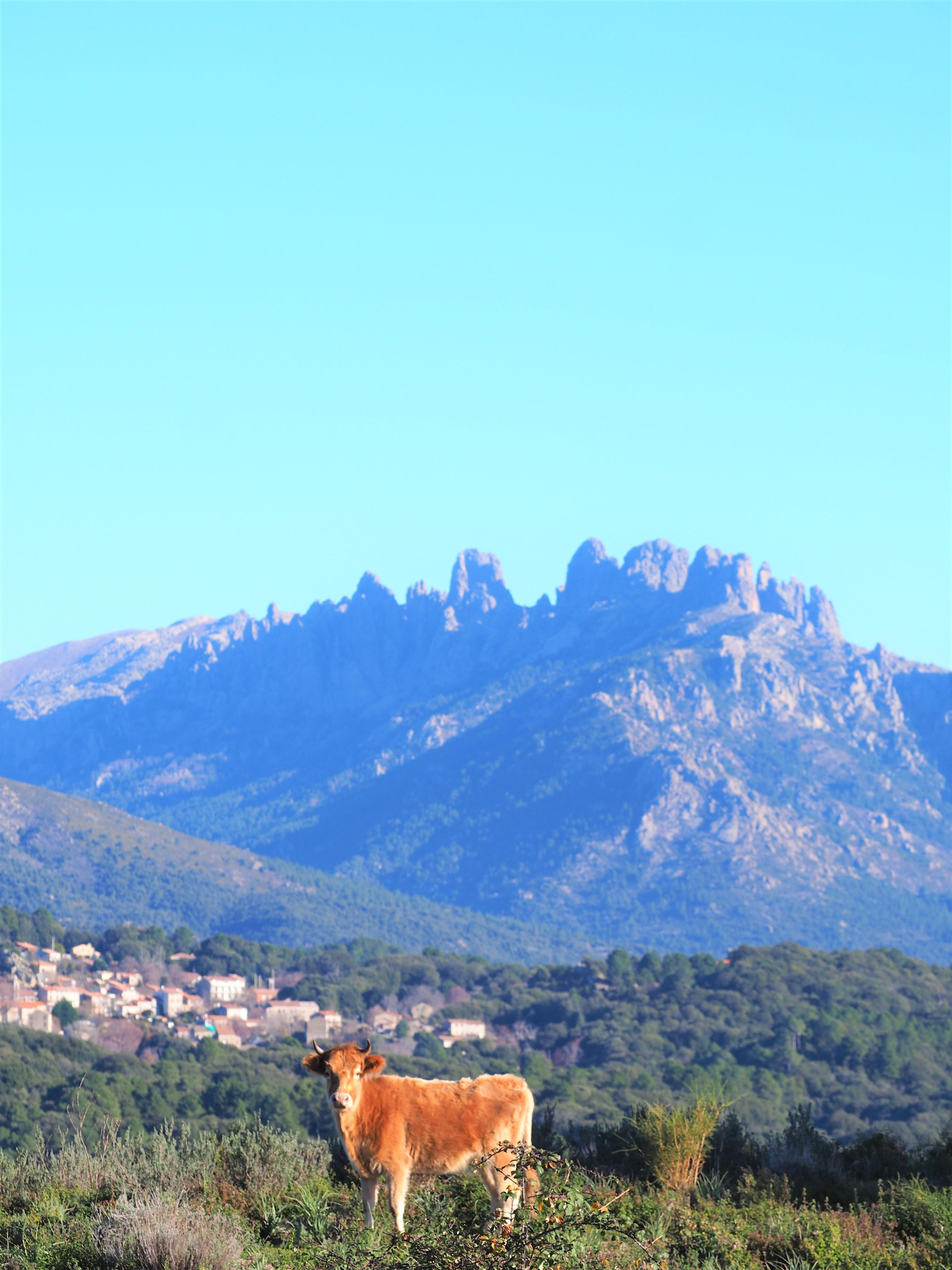 Alta rocca tourisme corse du sud bavella