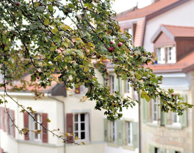 Automne, La cité Lausanne vieille ville clioandco blog voyage