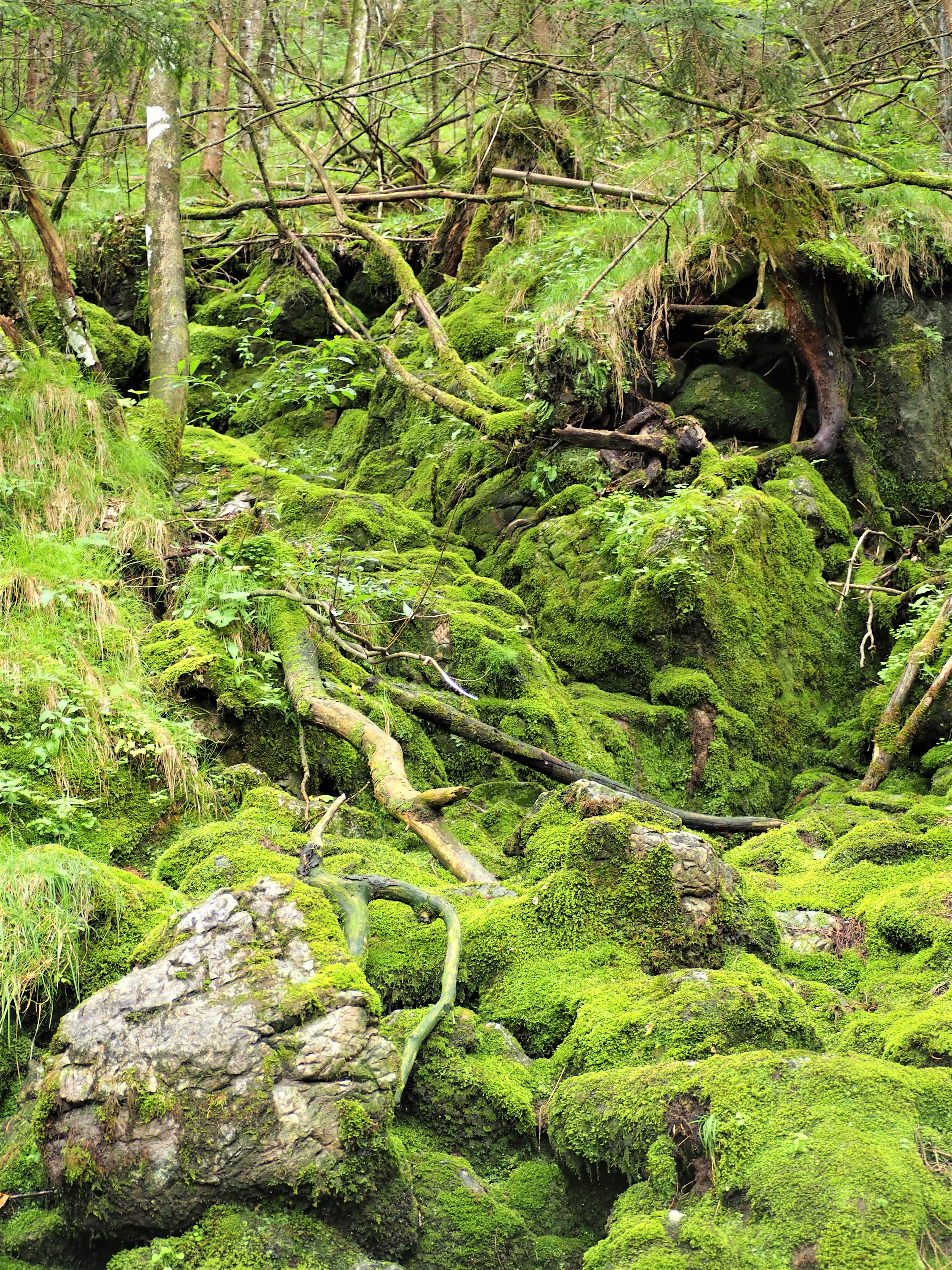 chemin-de-randonnee-depuis-Ramsau-bei-Berchtesgaden-Allemagne-pour-aller-jusquau-lac-Hintersee