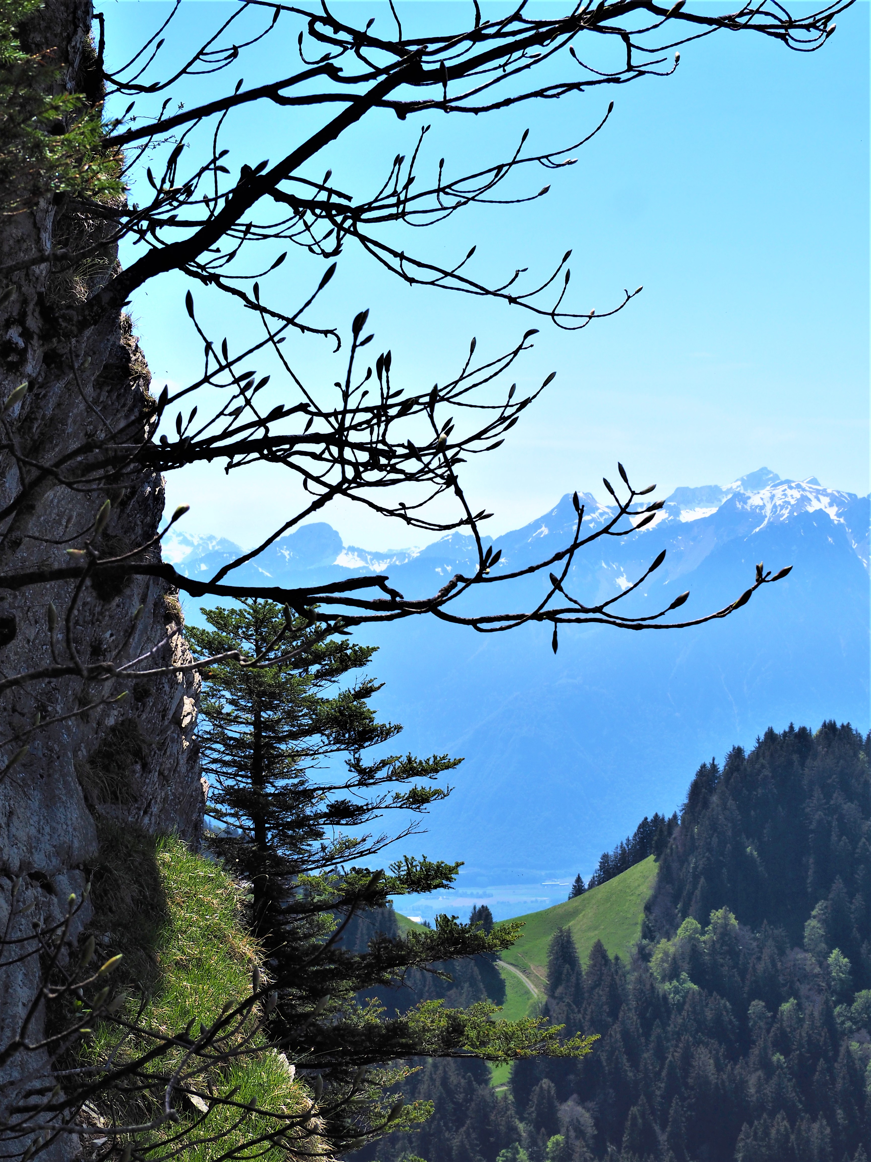 Randonnee-canton-de-Vaud-Dent-de-Jaman-paysage.