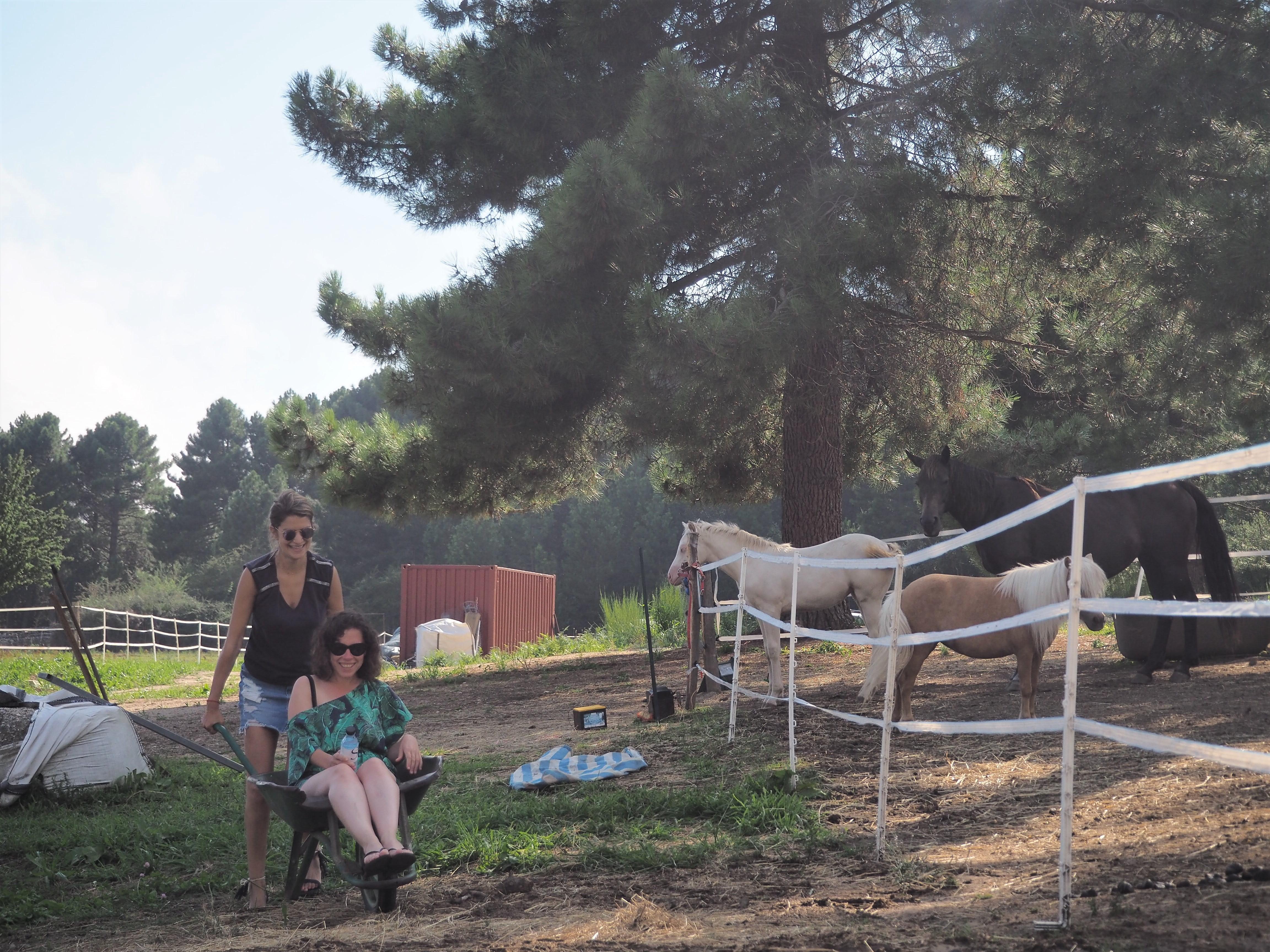 Alta Rocc'ânes balade en anes corse du sud