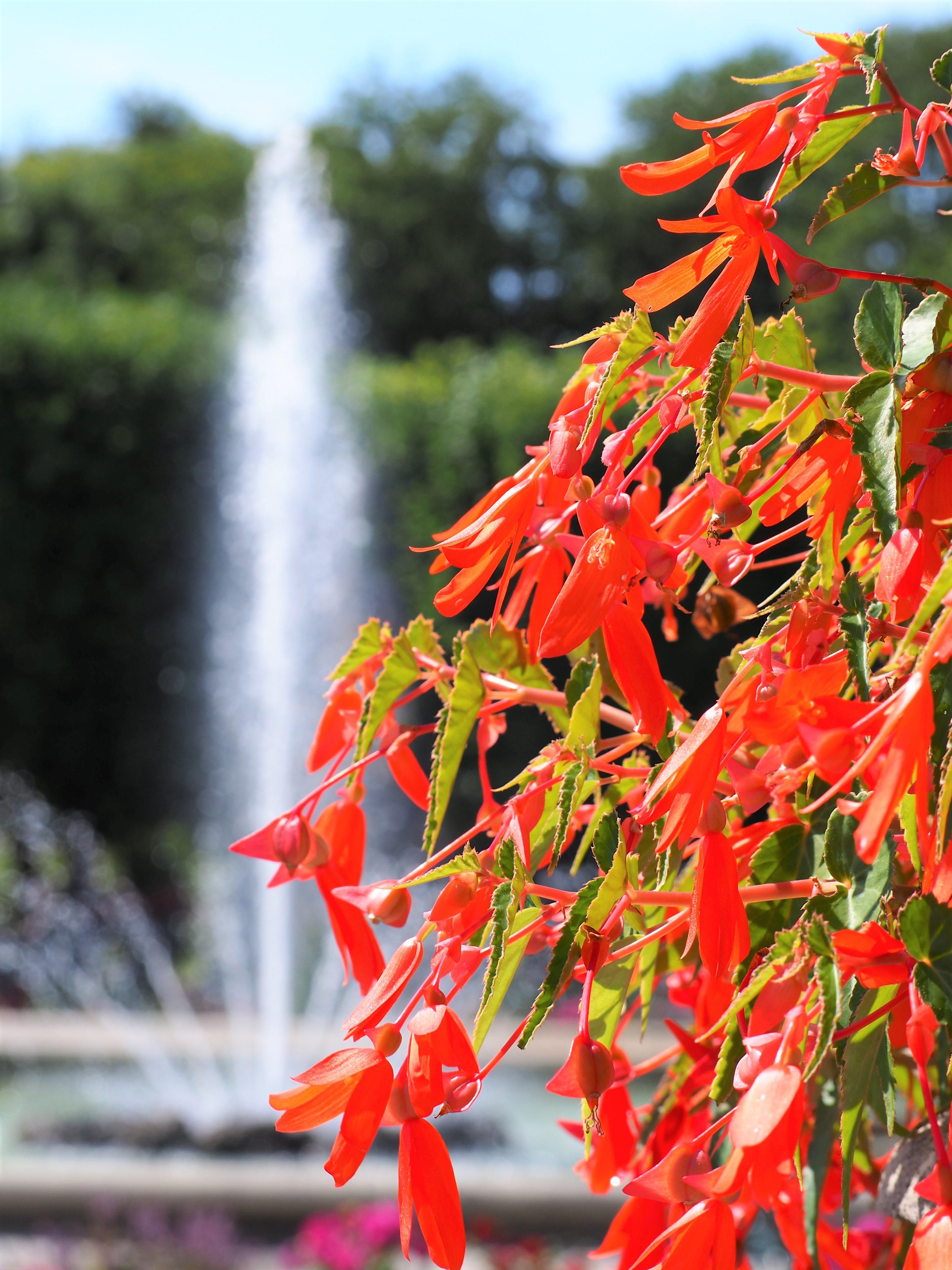 jardin-de-mirabell-salzbourg-autriche.jpg