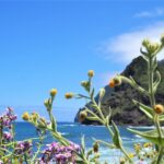 Madere-lile-aux-fleurs-que-voir-que-faire-blog-voyage-clioandco