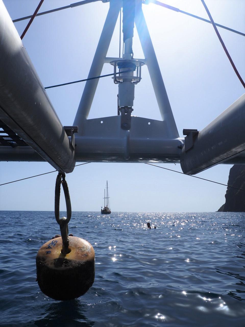 Catamaran Seaborn tour en bateau pour voir les dauphins et baleines