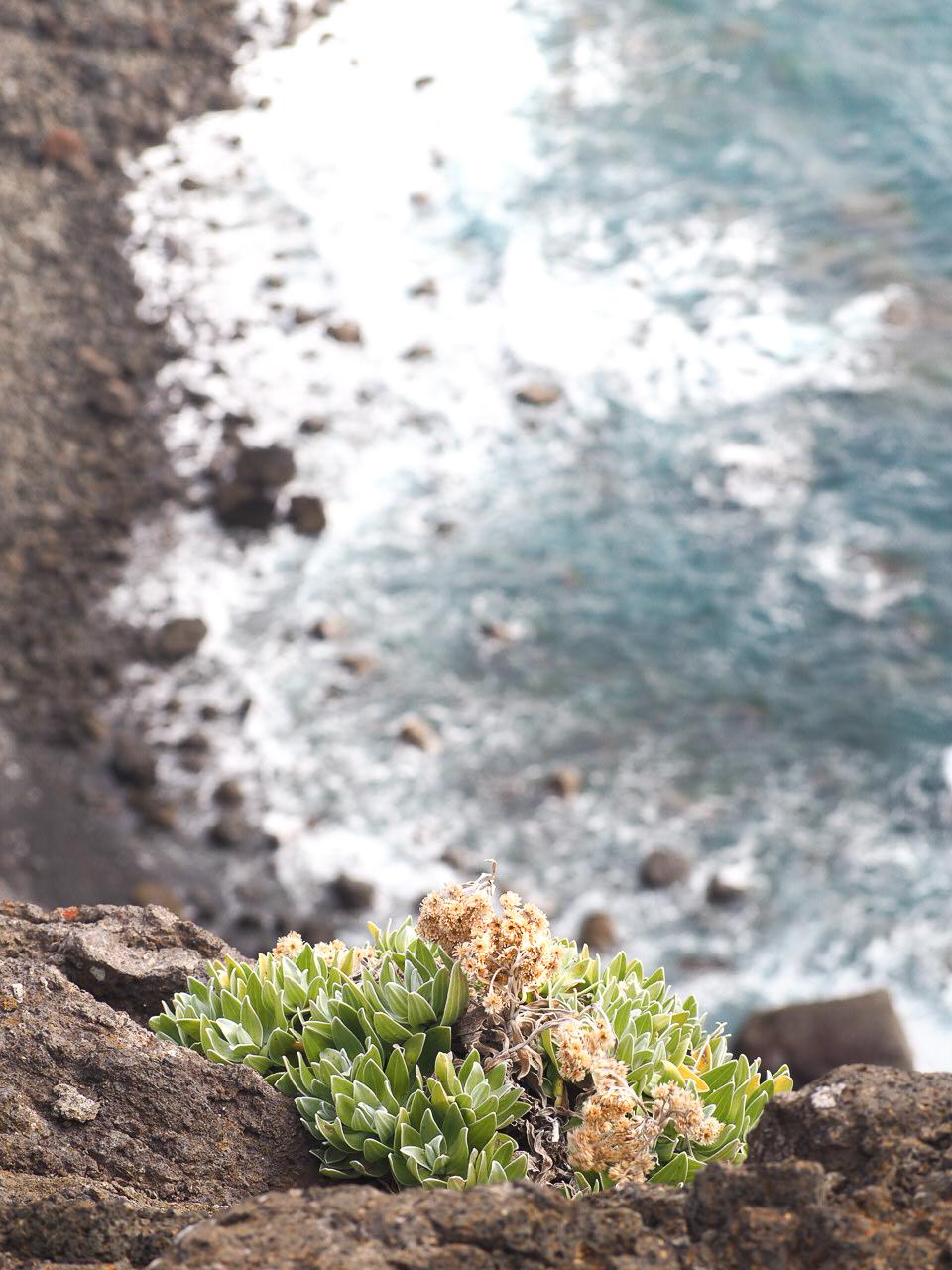 fleurs-Madere-randonnee-ponta-de-sao-lourenco